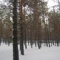зимний лес в Заиграево