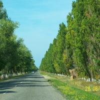 на въезде в поселок Кучугуры