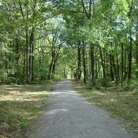 Лесноя парковая зона