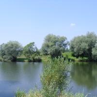 Київець