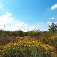 Осенние цветы Россоховатого