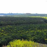 Лесной массив Россоховатого