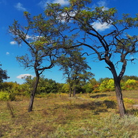Деревья Лесного