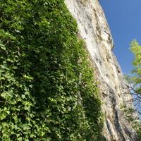 Плющ карабкается на скалы