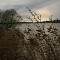 Пойма реки