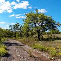 Дорога  на Лесной