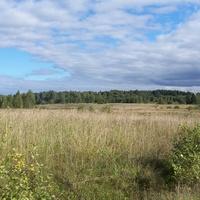 заросшие поля у деревни Быльчино, август 2012 года