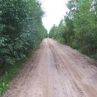 дорога из Сосниц в Быльчино, август 2012 года