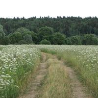 "дорога на ""Турбазу"" от д.Залучное"