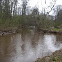 Река Пола ниже деревни Вешки. Река течет в лесу в низких берегах. Завалов очень много.