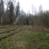 Лесовозная дорога вдоль реки Пола (правый берег), ниже деревни Вешки.