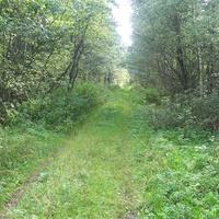 дорога из Лутовёнки в Долматово, 5 км, зарастает, но ещё можно пройти.