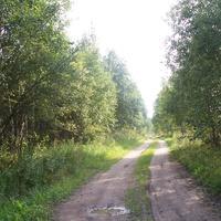 Начало дороги из Долматово в Гостевщину, расстояние всего около 2,5-3,0 км