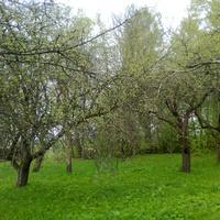 деревня Заболотье бабушкин сад
