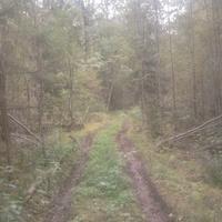 Старинная дорога из лутовёнки в Секратово и Сосницы, ещё можно пройти, 3 км