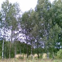 лес за огородом