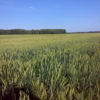 Нагибинские поля