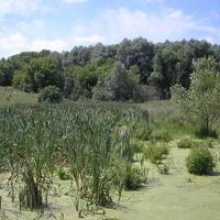 Заброшенный пруд у леса