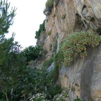 Сад у скалы