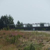 Мост через реку Шередарь