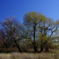 Дерево на границе Старых и Новых Выселок