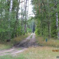 Лесная дорога на Кулики