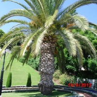 Haifa. Baha'i gardens