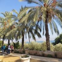 на березі Галілейського моря