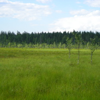 никитинское болото