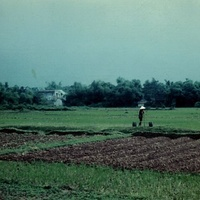 Пригород Ханоя, плантация