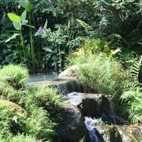 Джорджтаун. Сад тропических специй.