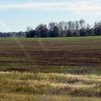 Новый Ольшанец, поле у дороги