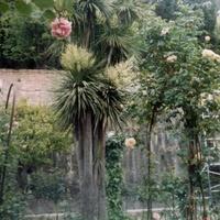 Гранада. Альгамбра, сады Хенералифе.