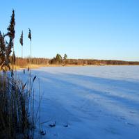 Лебединское озеро зимой