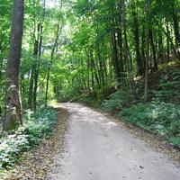 Лесная дорога в сторону с.Межирич