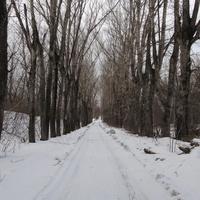 Дорога в посёлок