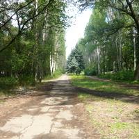 Аллея в парке по направлению к ДК Юнокоммунаровска.