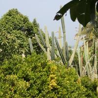 Джорджтаун. В ботаническом саду.