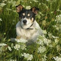 найзнаменитіший саєвський собака-Барбос