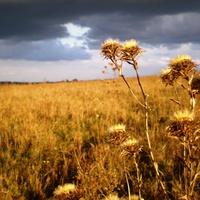 пізня осінь,саєво