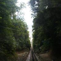 Джорджтаун. Букит Бендера. Дорога для фуникулера, проходящая сквозь джунгли.