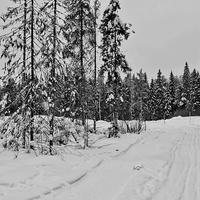 Начало прогулочной лыжни