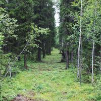 В лесу возле Малых Карел