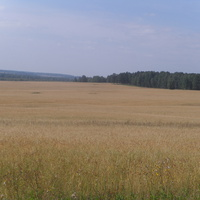 Пшеничное поле (в сторону Бадонок)