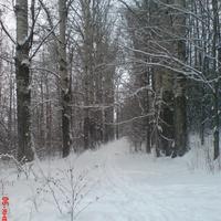 Зимний парк, тополинная аллея