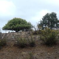 Деревья, растущие рядом