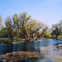 пруд в Вязынке