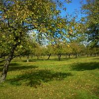 Кристаиполье, фруктовый сад