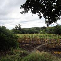 Байрак, огороды