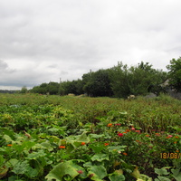 Огороды, Першотравневое